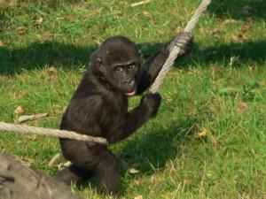 Miláček pražské zoo Moja slaví patnácté narozeniny. Stala se matkou a žije ve Španělsku