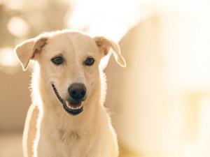 Centrální registr psů vznikne od roku 2022