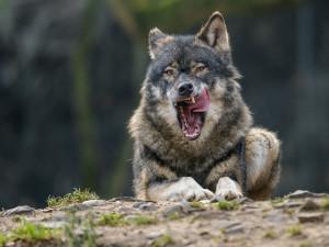 V pražské zoo dnes návštěvníci oslavují Světový den divoké přírody