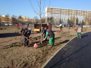 Parkoviště u Jiřetínské ulice se mění v park. Praha 9 vysazuje stromy