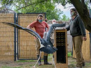 Pražská zoo dnes otevřela vnitřní expozice a pokladny. Některá omezení zůstávají v platnosti