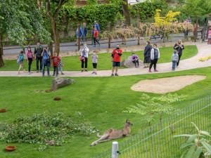 FOTO: Na otevření nového Darwinova kráteru přišly do pražské zoo tisíce návštěvníků