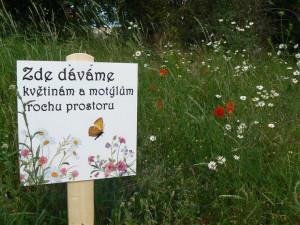 Unikátní tabulky Pražany upozorňují, kde se krmí včely. Cílem je pomoci přírodě