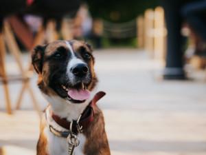 Praha eviduje přes 86 tisíc psů. Jejich počet opět vzrostl
