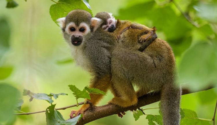 Lidé díky novému projektu pražské zoo s názvem Stravenky pro zvířata pomůžou nakrmit padesát druhů zvířat