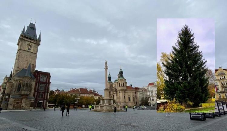 Tohle je vánoční strom, který letos ozdobí Staromák. Vedení Prahy tají termín jeho rozsvícení