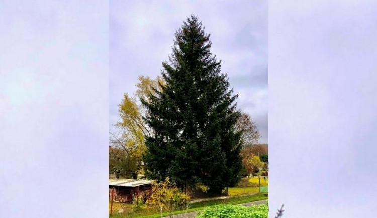 Vánoční strom pro Prahu je pokácen. Ozdobí ho šest kilometrů světelných řetězů