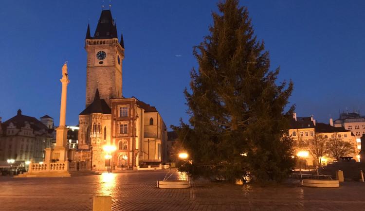 FOTO, VIDEO: Vánoční strom pro Prahu je na svém místě. Rozsvítí se o víkendu