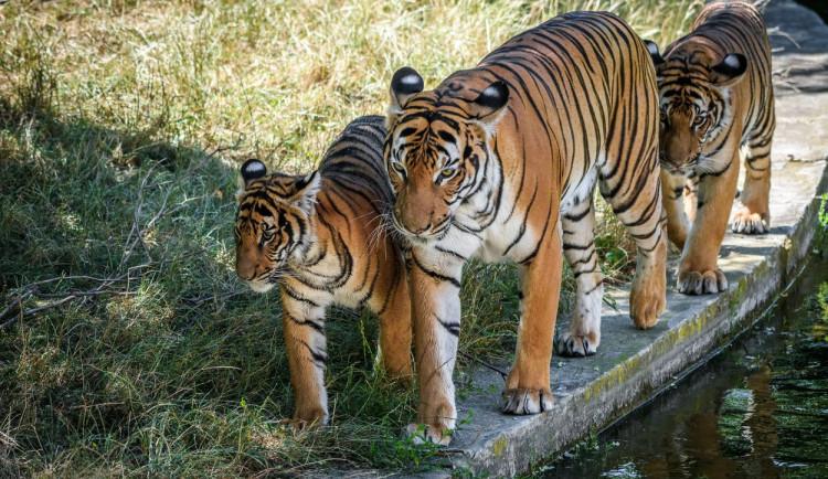 Pražská zoo a botanická zahrada v Praze se ve čtvrtek chystají otevřít své brány návštěvníkům