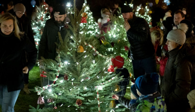 VÁNOCE NA DESÍTCE: Deset velkých a 33 malých stromů i kluziště při ZŠ Veronské náměstí