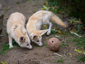 Návštěvnost pražské zoo v roce 2020 klesla kvůli koronaviru o 42 procent