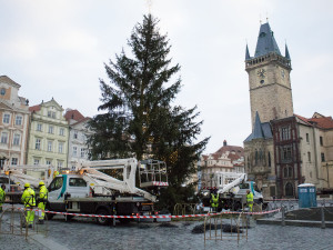 FOTO: Podívejte se, jak probíhalo odstrojování vánočního stromu na Staroměstském náměstí. Co s ním bude dál?