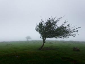 Meteorologové varují před silným větrem. Hrozí poškození budov a pády stromů