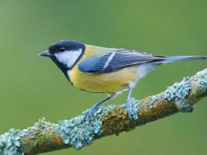 Lidé na krmítkách sečetli půl milionu ptáků. Nejčetnější je sýkora koňadra
