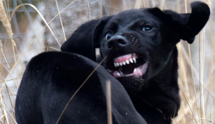 Majitel psa, který pokousal čtyřletého chlapce, se přihlásil na policii. Dítě je v umělém spánku