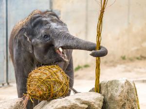 Velikonoční nadílku dnes dostala také zvířata v pražské zoo