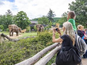 Pražská zoo v pondělí otevře své brány návštěvníkům. Zpřístupní venkovní prostory