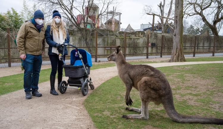 Do zoo přišlo od pondělí přes 8000 návštěvníků, do botanické zahrady zavítalo 2000 lidí