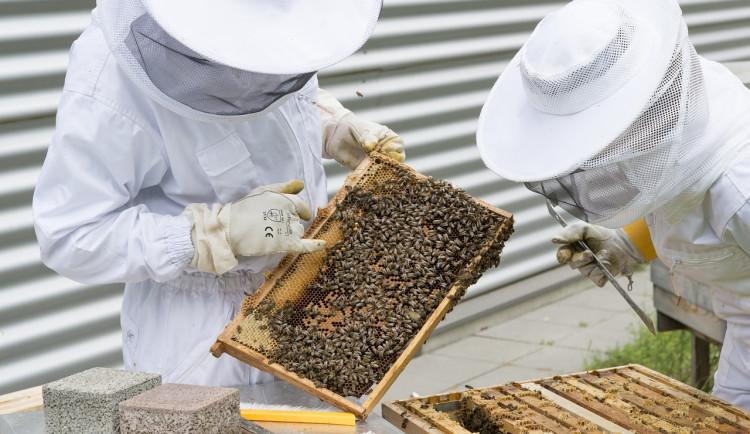 Miss Kompost, Srdcevčele nebo holubník. Praha dá 40 milionů na projekty životního prostředí