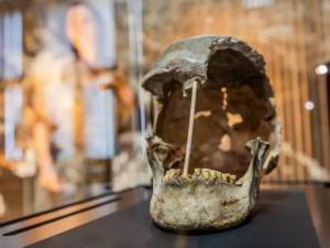 Lebku ženy, která žila před více než 45 tisíci lety, vystavilo Národní muzeum