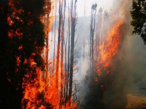 Na Vinohradském hřbitově hořely túje. Škoda je sto tisíc korun