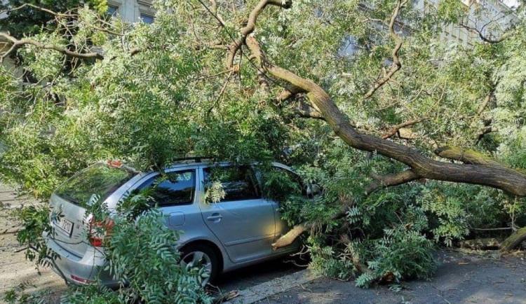 V Praze spadl strom na auto. Park je kvůli možným pádům dalších stromů uzavřen