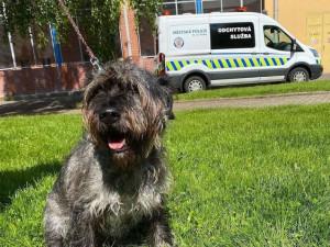 Strážníci v Praze hledají veterináře pro útulky s opuštěnými zvířaty