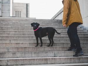 V Praze je více než devadesát tisíc psů. Nejčastěji běhá po metropoli kříženec Ben