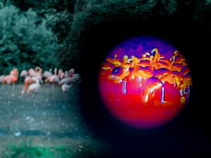 Pražská zoo chystá noční prohlídky. Lidé budou moci zvířata sledovat termokamerami