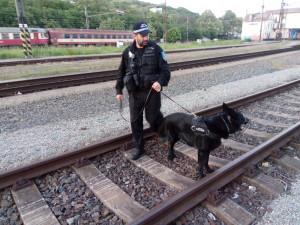 Pes Merlin pomohl najít muže, který chtěl spáchat sebevraždu